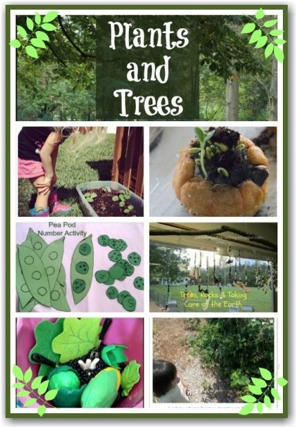Trees and Plants - some fuin activities for kids exploring the natural world. Lots of outdoor activity ideas