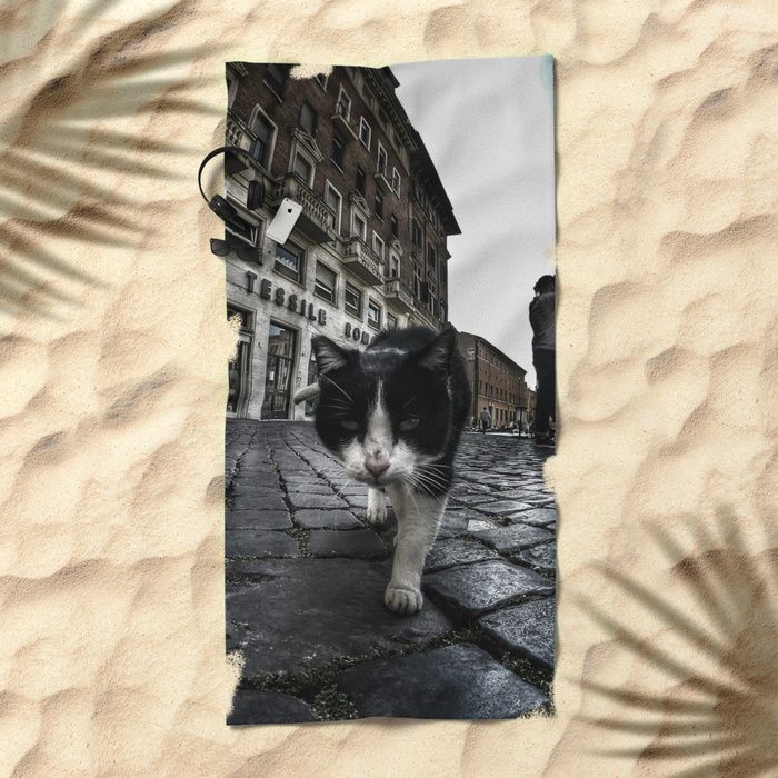 Close up portrait of a tough street cat in the city of Rome.  #cat #streetcat #animal #streetphotography #photography #gopro #wideangle #street #city #cityphotography #rome #italy #towel