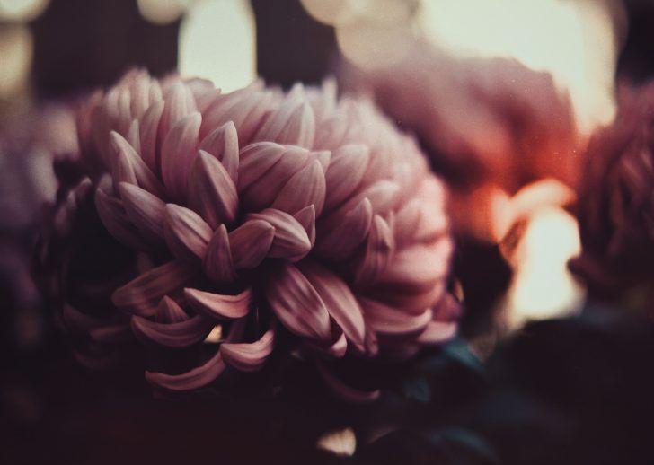 flowers peonies petals blur 5K HD Wallpaper