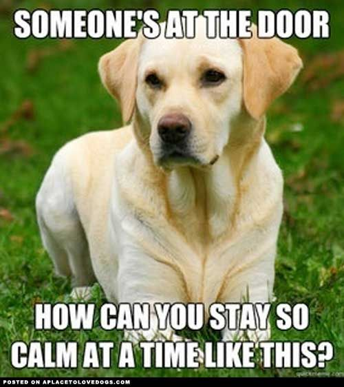 hahaLabrador Retriever, The Doors, Puppies, Funny Dogs, Pets, Dogs Logic, Funny Stuff, Things, Animal