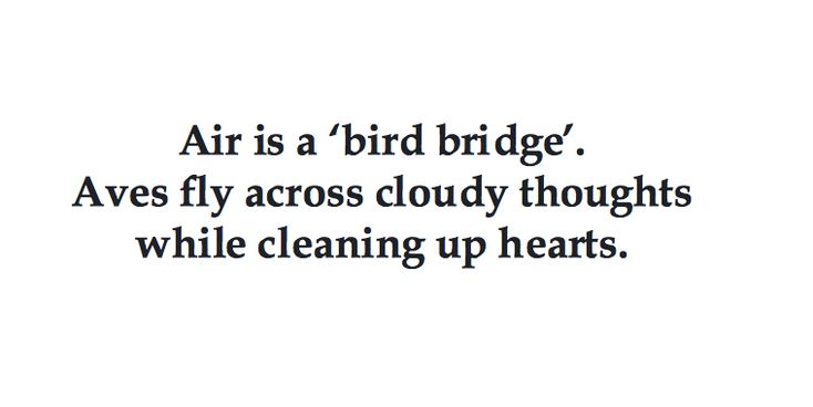 Air is a 'bird bridge'. Aves fly across cloudy thoughts while softening hearts.