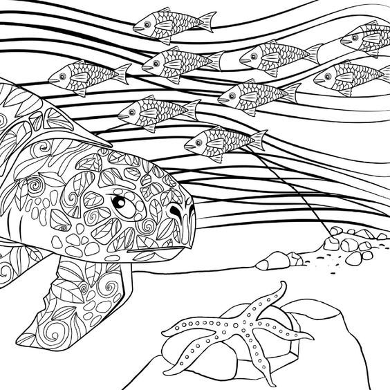 237 best coloring turtle, penguin images on Pinterest