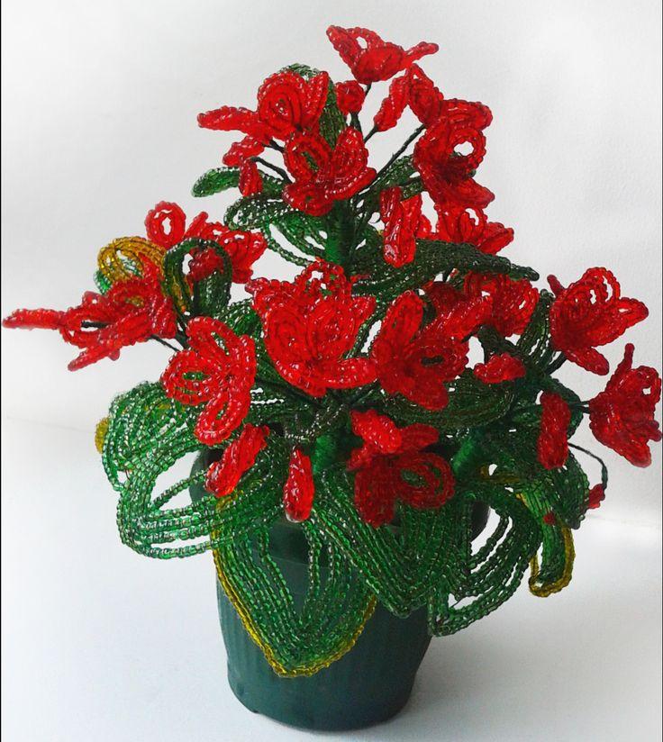 Красная герань. red geraniums