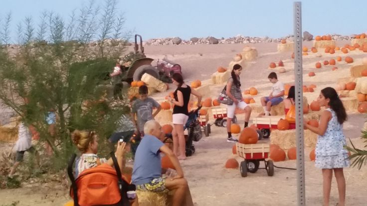 Visit the Lake Las Vegas pumpkin patch and stay to celebrate Fall with activities, food & concerts for your entire family.