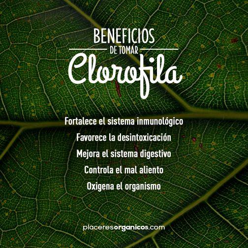 Beneficios de la clorofila #Salud #Clorofila #Desintoxicación #Digestión www.placeresorganicos.com