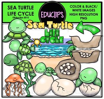 41 best images about Turtle Life Cycle on Pinterest | Life ...