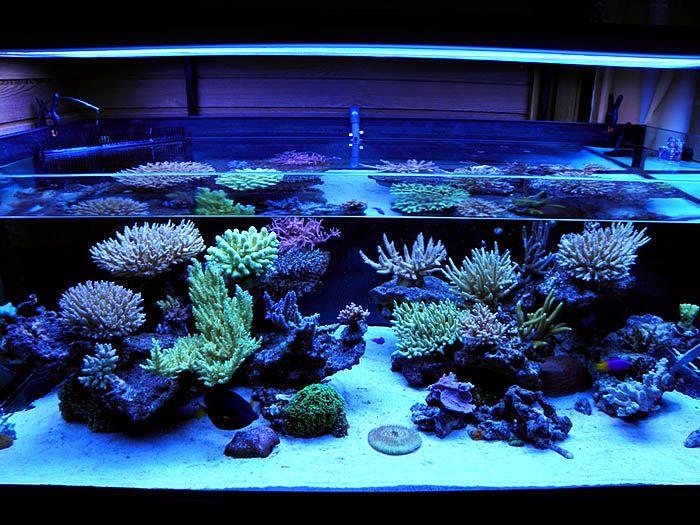 Reef - Live