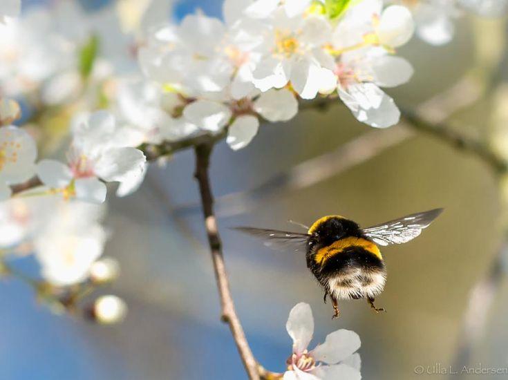 I am flying by ulla.lippert.andersen