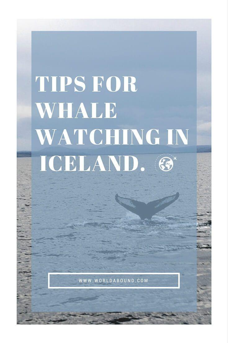 Whale Watching | Husavik | Iceland