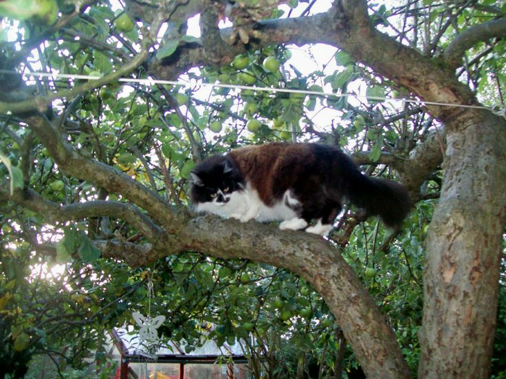 Molly in the tree,