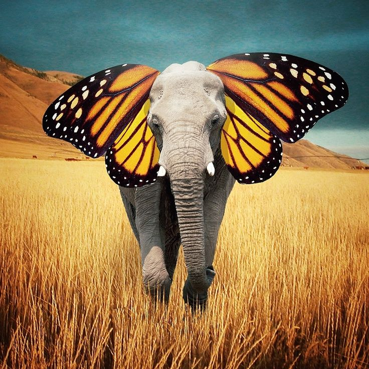PHOTOSHOP: I like this photo because I think that it was a unique idea to use butterfly wings as an elephants ears.