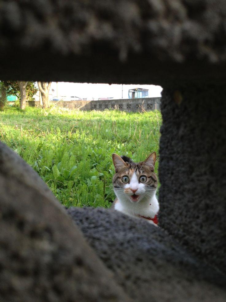:-O: Funny Animals, Kitty Cat, Stuff, Funny Cats, Pet, Crazy Cat, Funnies, Kitties, Photo