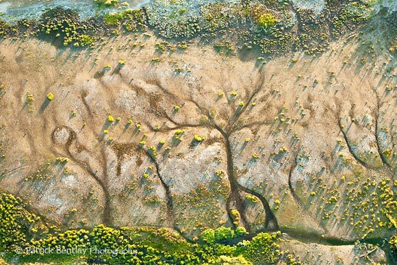 Etchings on untouched earth...like trees