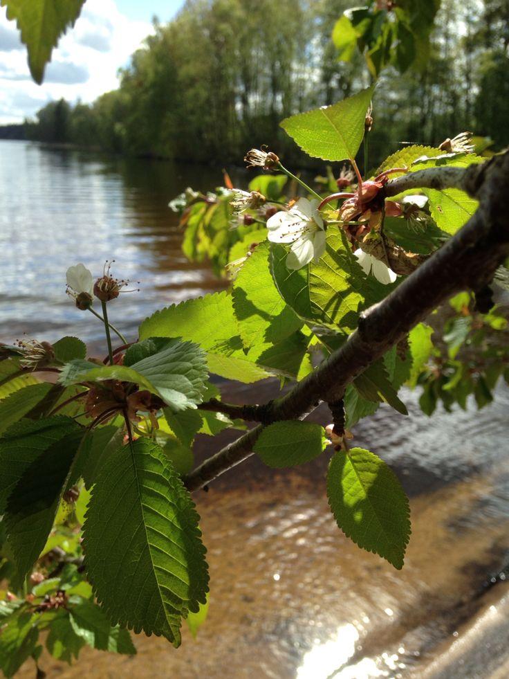 Lake Tenhultssjön in Sweden