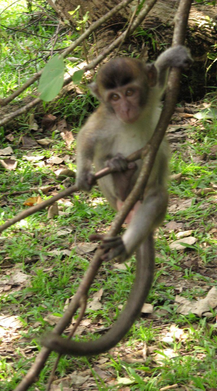 PN Bako, Borneo
