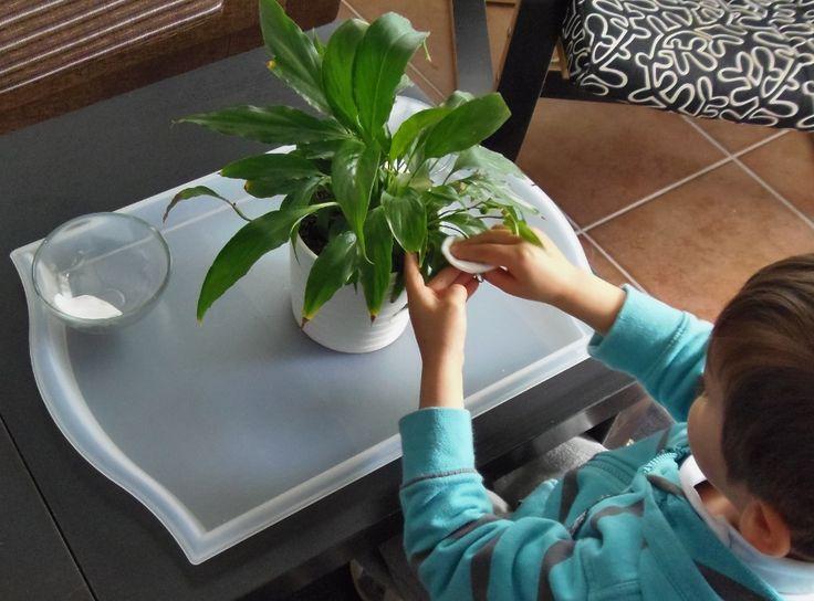 Cuidar plantas: Limpiar las hojas - Care of plants: Cleaning the leaves