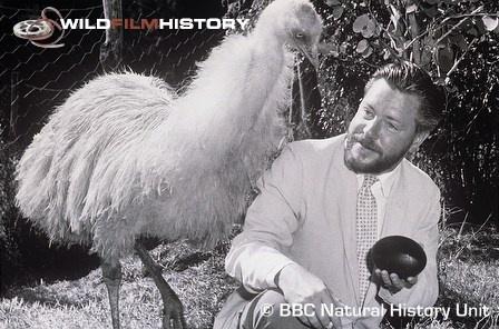 Gerald Durrell with an emu