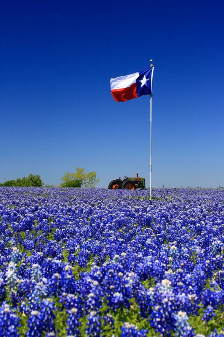 April is bluebonnet season in Texas.  It is a sight to behold.