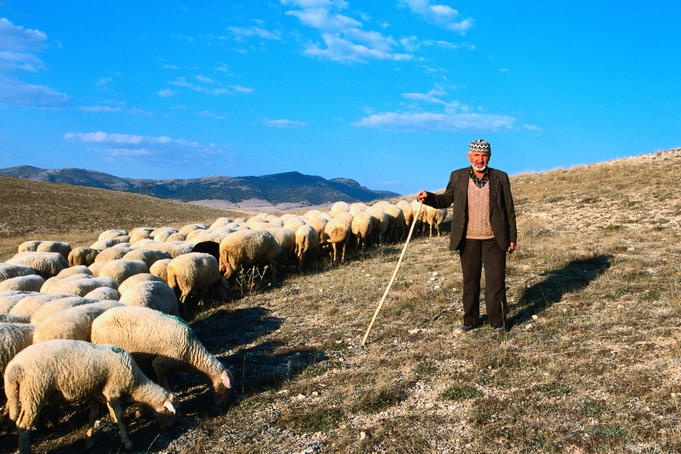 Shepherd and his flock, Turkey  Shepherd and his flock on the hills near Afyon in the North Aegean Region