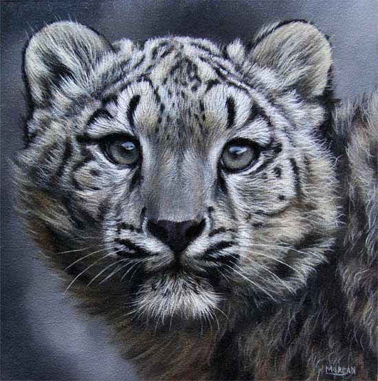 A little snow leopard cub I painted a few weeks ago, hope you like it . Ref photo was from my friend Steve Tracy www.onlineartdemos.co.uk