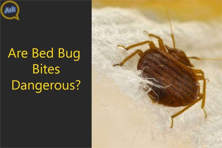 Bed Bug Bites Dangerous During Pregnancy