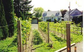 backyard vineyard on pinterest a video vineyard and in the spring
