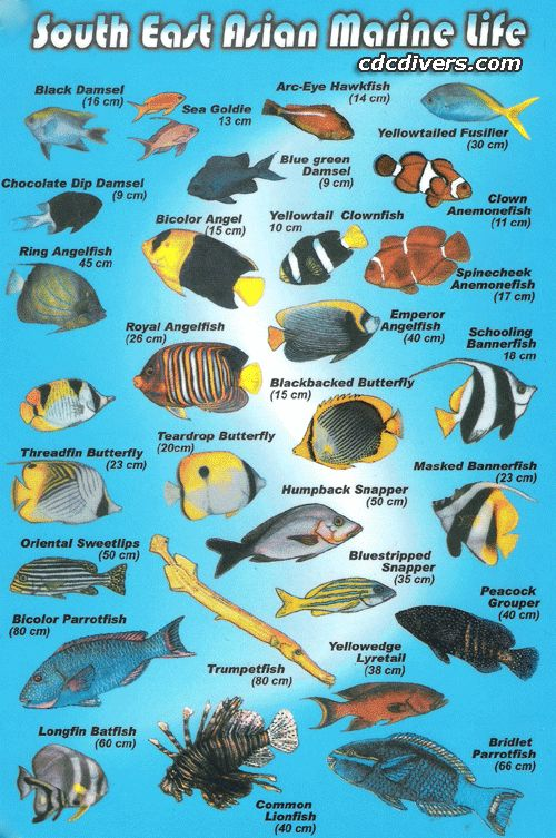 Fish Identification | ... Fish Identification Specialty Course with us today, and make friends