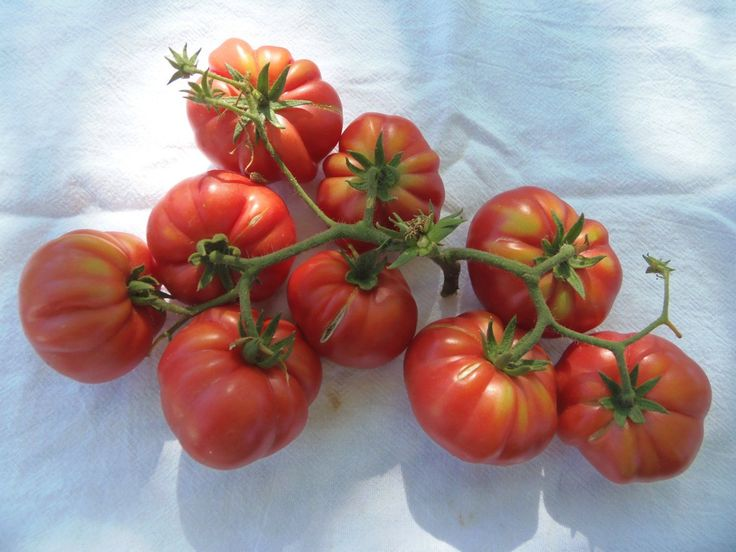 Red Ruffled Eggplant Seeds a.k.a Hmong Red - Perfect for the flower bed And vegetable garden. Heirloom from Africa, Very Beautiful !