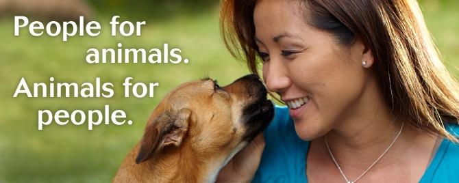 Anchorage Humane Society Dog Adoption