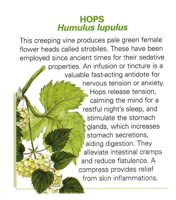 Hops  uses