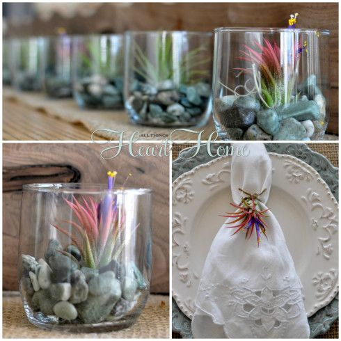 Air Plant Party Favors  - All Things Heart and Home/