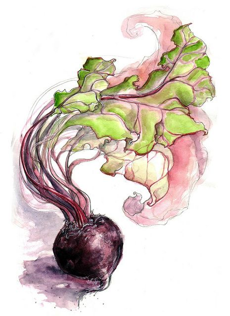 take something ordinary and turn it into art; Beetroot Study VI by Amy Holliday, via Flickr