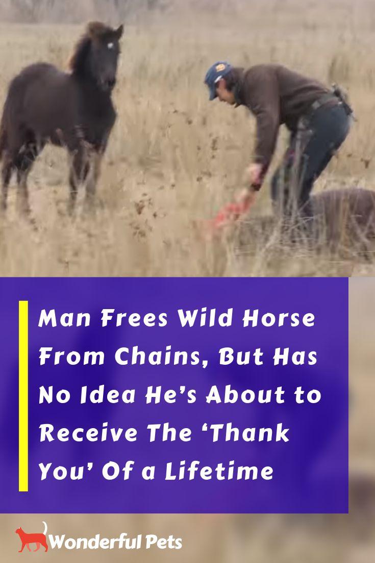 #Pferd #Pferde #niedlich #Liebe #Tier #Tiere
