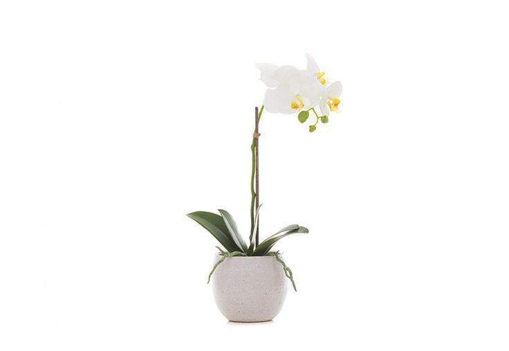 Phalaenopsis Tub Pot | Super Amart