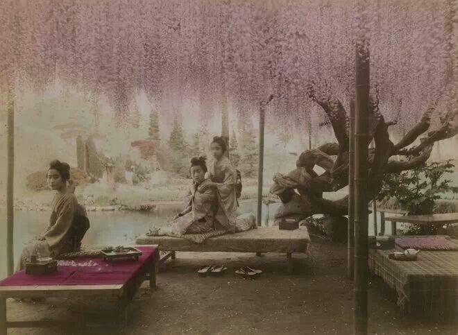"""Foto di inizio'900 -giovani donne sotto un'albero di glicine-dal blog """"Giappone nel cuore"""""""