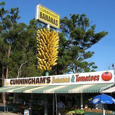 The Big Bunch of Bananas, Sawtell, NSW