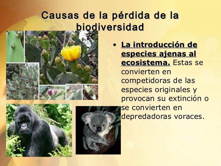Resultado de imagen para imagenes de la perdida de la biodiversidad causas