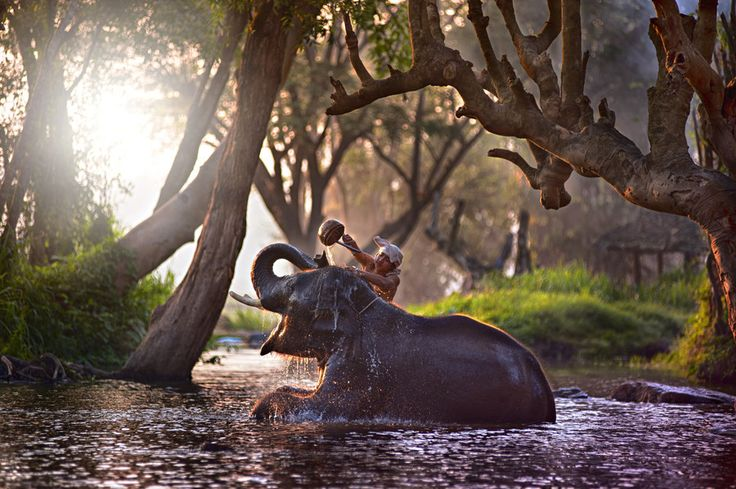 An elephant getting a bath