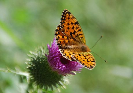 Butterfly #nature #piemonte #italy #provinciadicuneo
