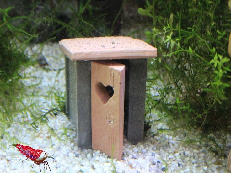 garnelentoilette nano aqua wood top deko aquarium fische garnelen aquathier kreative deko. Black Bedroom Furniture Sets. Home Design Ideas