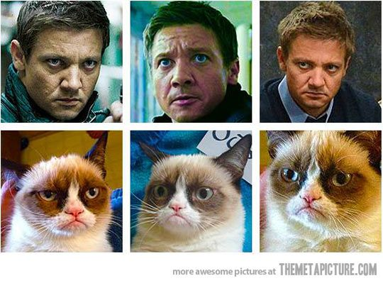 Hawkeye totally looks like Grumpy Cat. The more I look, the more
