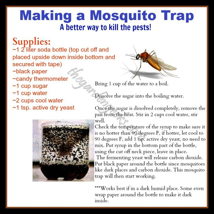 17 Best Images About Insect Problems On Pinterest