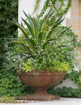 We have a mother in law plant (snake plant) surrounded by an assortment of beautiful Ivy's in a gorgeous urn container | Tangletown Gardens