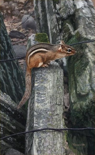 """Brent Townsend """"On The Fence"""" Squirrel"""