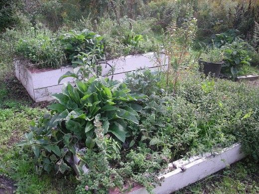 Mixed plantings in separate plots means that you can get continuous vegetables and herbs from your garden