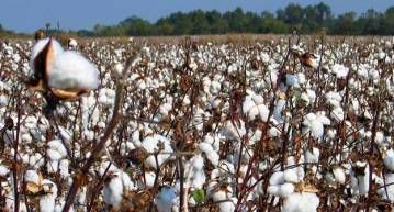 History of the Cotton Gin   History Lessons from the Homestead