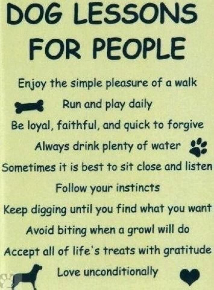 Image result for Dog words of wisdom