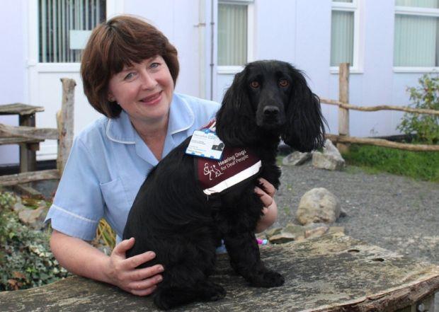 hear hear a guide to training a deaf puppy