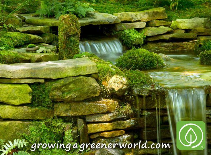 Joe Gardener Shows How To Grow Moss Gardens! And Waterfall Feature