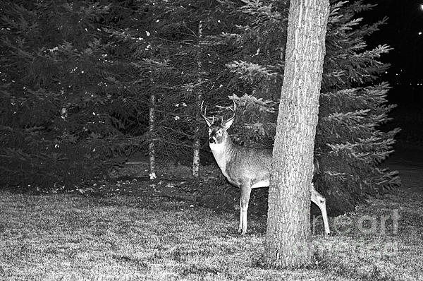 Lake Superior Wildlife